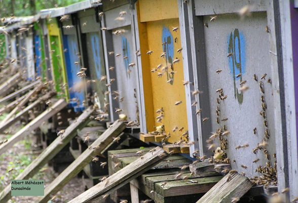 Albert méhészet - Albert Sándor és Kosdi Edit