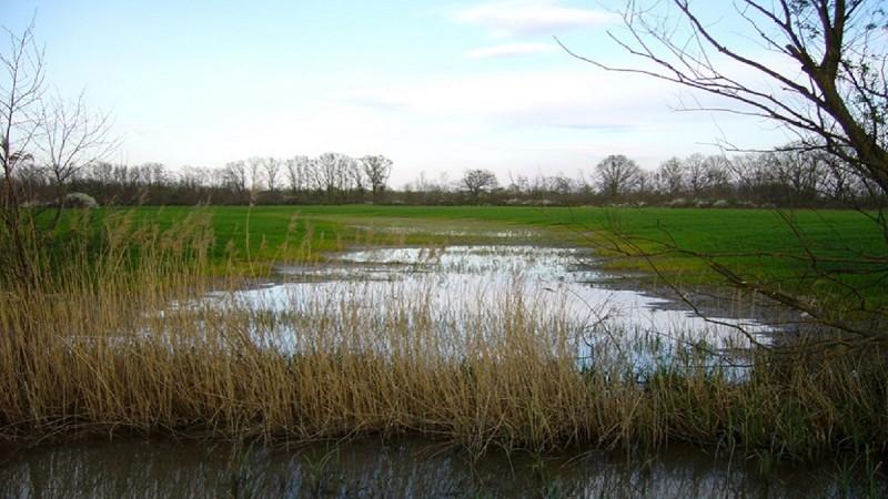 Eltűnt a hazai vizes élőhelyek jelentős része b3d3da7da9