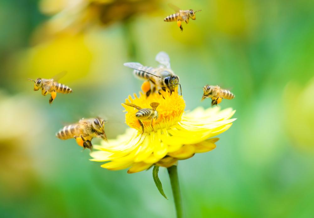 10 Méhészet és digitalizáció