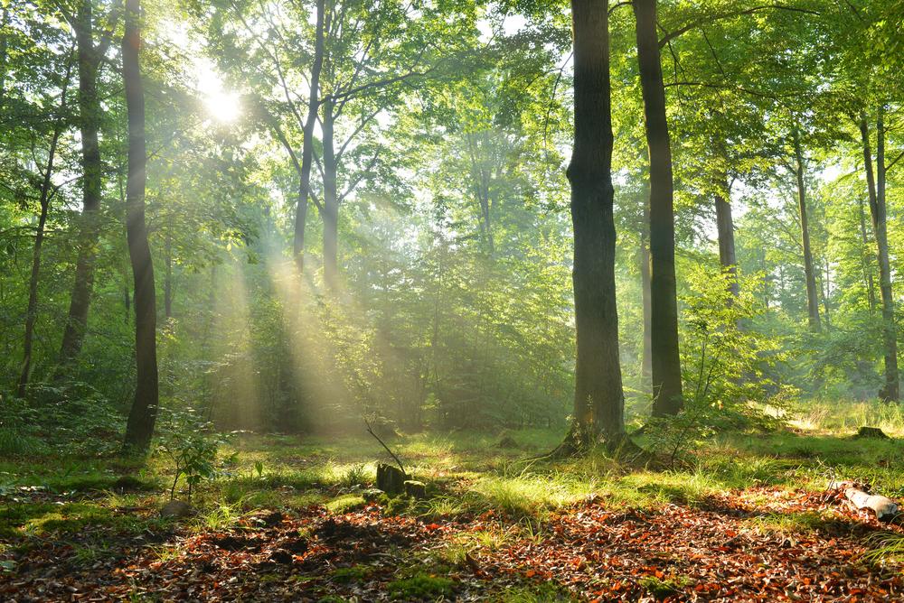 12 Precíziós erdészet